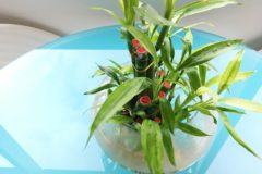 how-fast-does-lucky-bamboo-grow