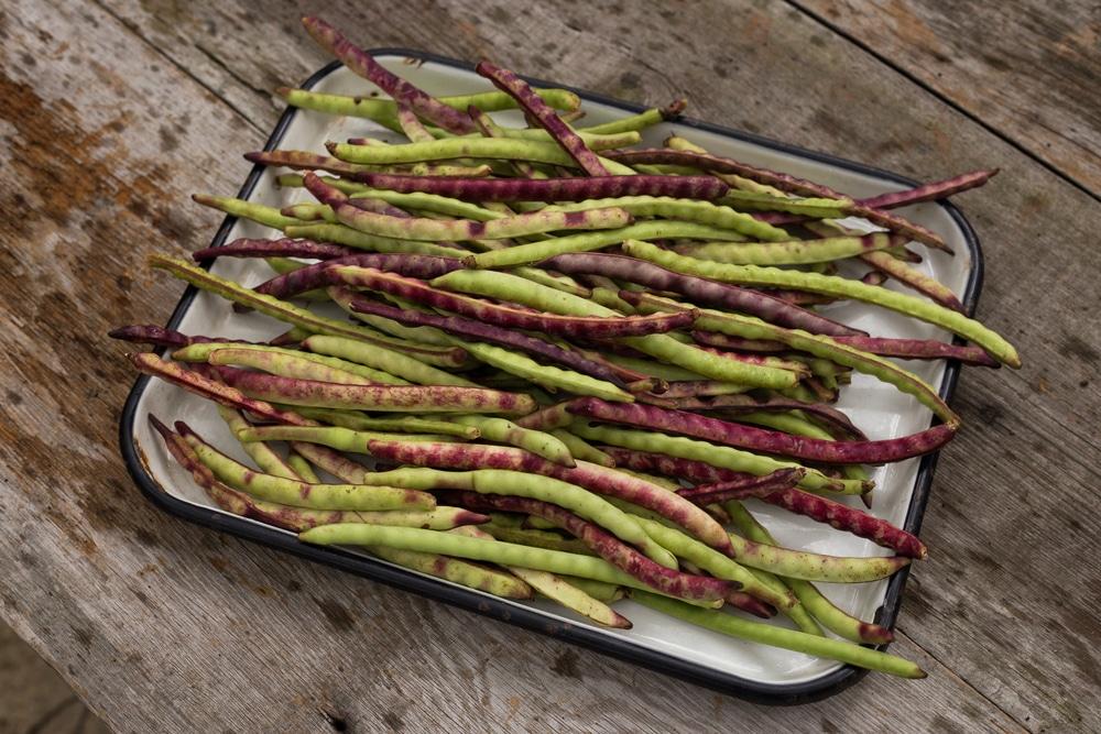 how-to-freeze-purple-hull-peas