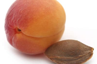 how-to-grow-apricot-from-seed