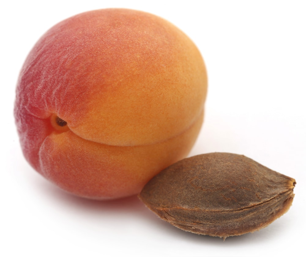 How To Grow Apricot From Seed