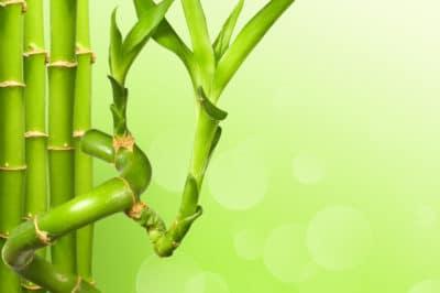 lucky-bamboo-fertilizer