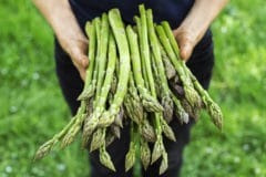 organic-asparagus