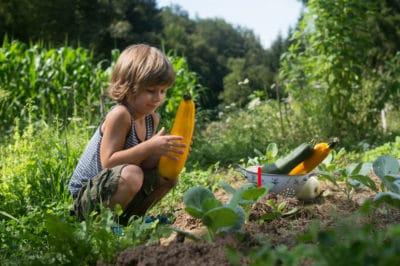 companion-plants-for-zucchini