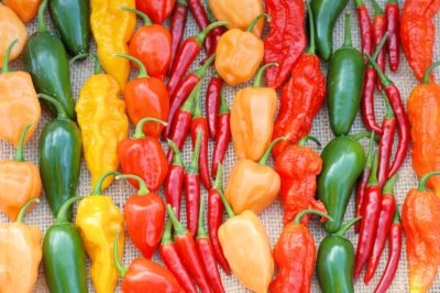 growing-hot-peppers