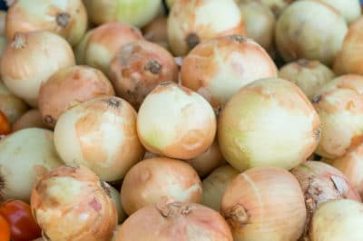 growing-sweet-onions