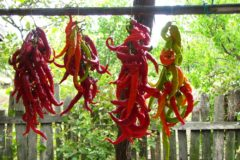 how-to-dry-peppers