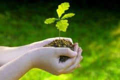 how-to-grow-an-oak-tree-from-an-acorn