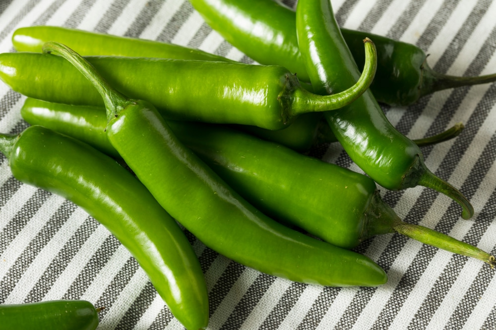 When To Pick Serrano Peppers Pro Picking Tips