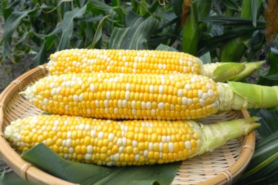 how-to-put-up-corn