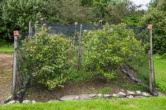 netting-for-blueberry-bushes