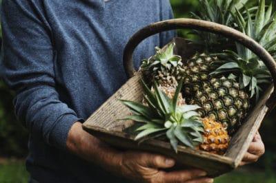 pineapple-harvest