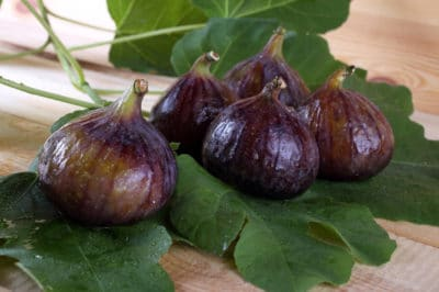 when-to-pick-figs