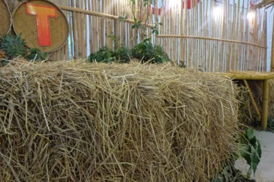 growing-potatoes-in-straw-bales