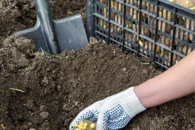 how-deep-to-plant-potatoes
