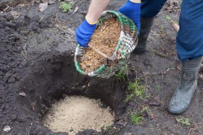 blueberry-soil-mix
