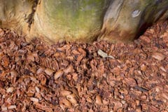 pecan-shell-mulch