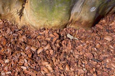 pecan-shell-mulch