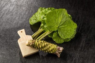 growing-wasabi