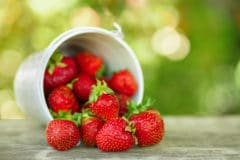 how-to-ripen-strawberries