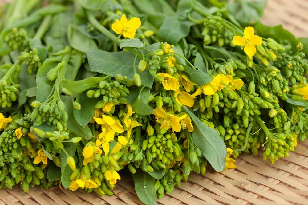 Turnip Flowers » Top Facts, Tips & Uses Turnip Companion Plants