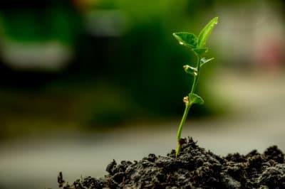 how-to-grow-a-lime-tree