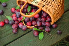 how-to-ripen-plums