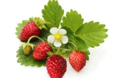 what-do-strawberry-plants-look-like