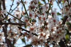 when-do-plum-trees-bloom