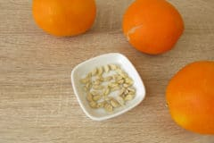 how-to-plant-orange-seeds