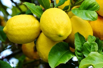how-to-grow-a-lemon-tree