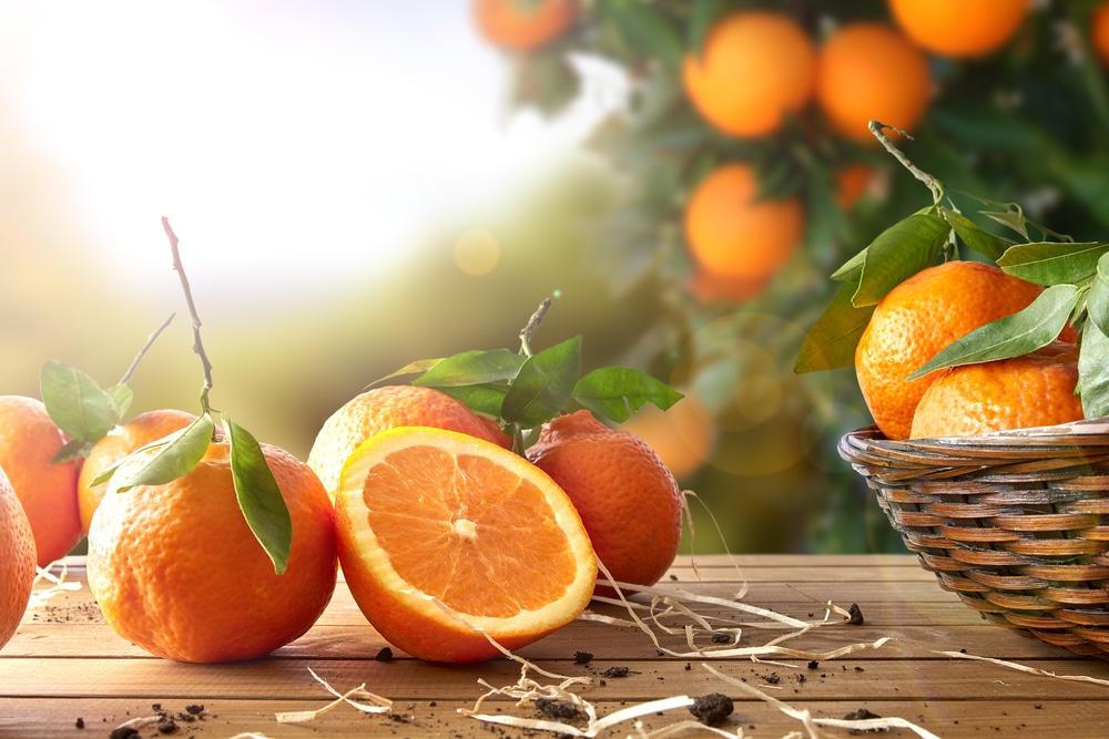 Картинки с апельсинами красивые