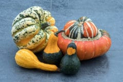 when-to-pick-gourds