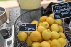 organic-lemon-tree
