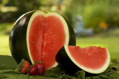 growing-sugar-baby-watermelon