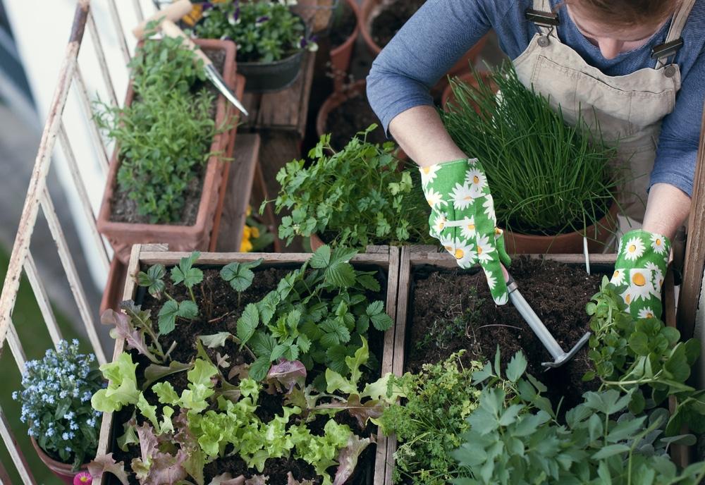 Create Herb Garden On The Balcony How